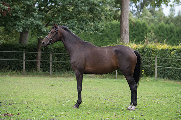 Holly (Johnson x Chronos)